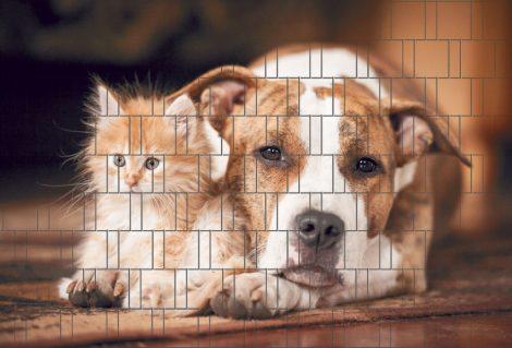 Táblás kerítésbe fűzhető Cica és a kutya kép 250x180 cm 19 cm-es szalagból műanyag belátásg átló szé