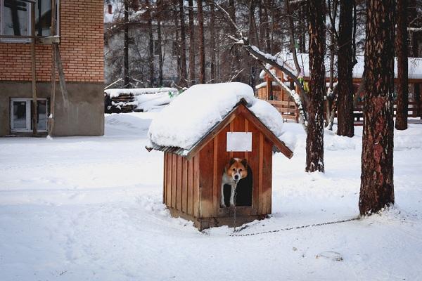 Házravaló Webáruház kutyaház